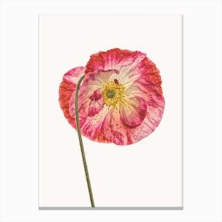 Poppy IV Canvas Print