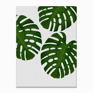 Monstera Leaf III Canvas Print