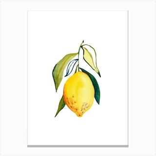 Lemon 1 Canvas Print