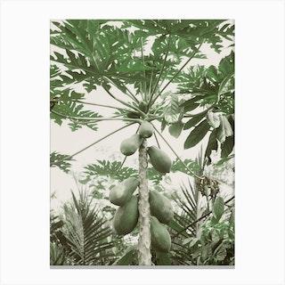 Jungle IV Canvas Print