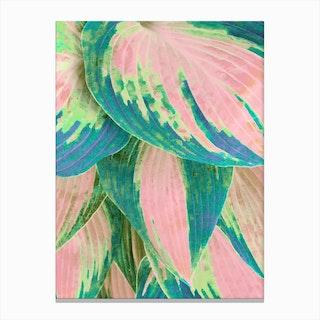 Hosta Multicolor Canvas Print