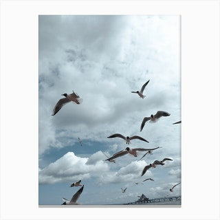 Sea Side Gulls Canvas Print