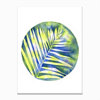 Fern Shadows Canvas Print