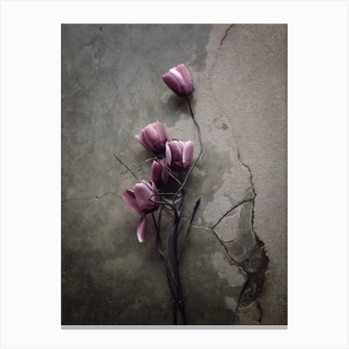 The Tulip Canvas Print