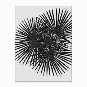 Fan Palm Black & White Canvas Print