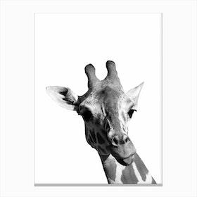 Monochrome Giraffe Canvas Print