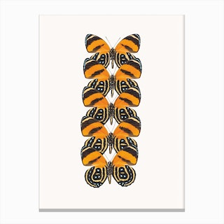 Butterflies VII Canvas Print