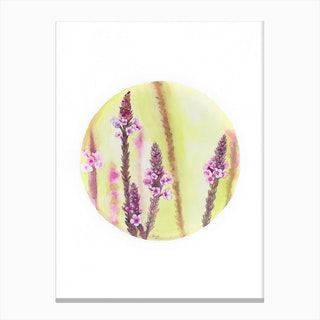 Circular Verbena Canvas Print