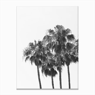 Palm Trees  1 Canvas Print