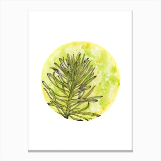 Euphorbia On Green And Yellow Canvas Print