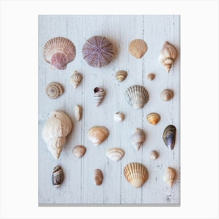 Shell Collage Canvas Print