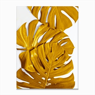 Monstera Gold Canvas Print