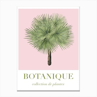 Botanique 2 Pink And Green Canvas Print