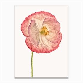 Poppy VI Canvas Print