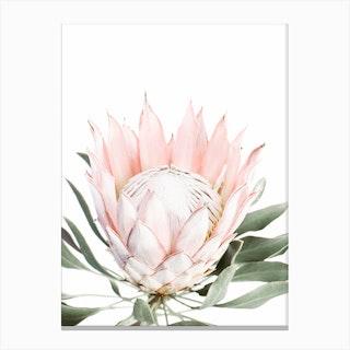 Blush Protea Canvas Print