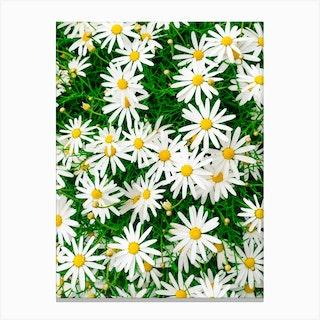 Carmel Blooms IV Canvas Print