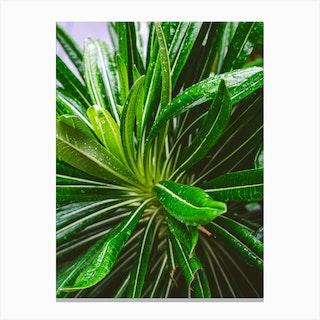 Lime Botanicals Canvas Print