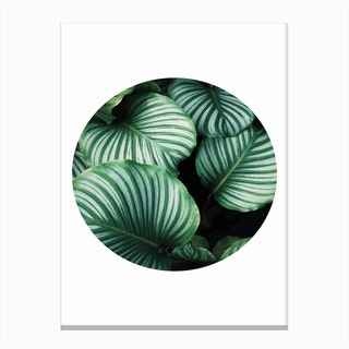 Green Leaf Circle Canvas Print