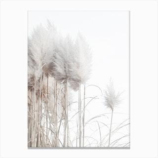 Pampas Grass II Canvas Print