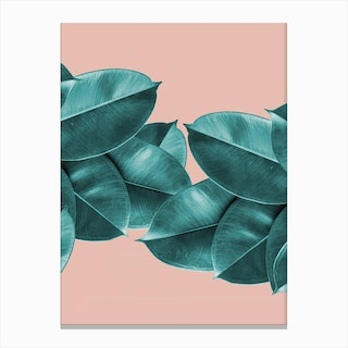 Green Blush Ficus Leaves Canvas Print