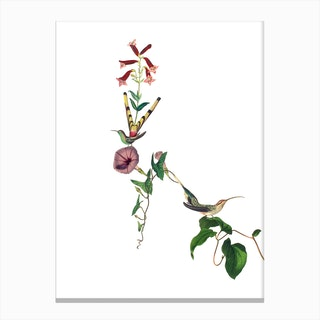 Hummingbirds of Paradise Canvas Print