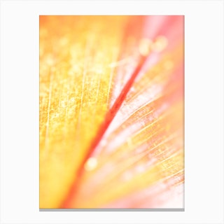 Details Of Leave Canvas Print
