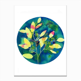 Winter Eucalyptus Canvas Print