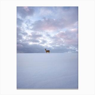 Alone Deer Canvas Print