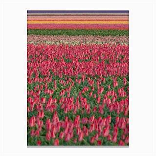 Tulip Field 01 Canvas Print