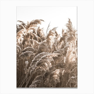 In The Reeds II Canvas Print