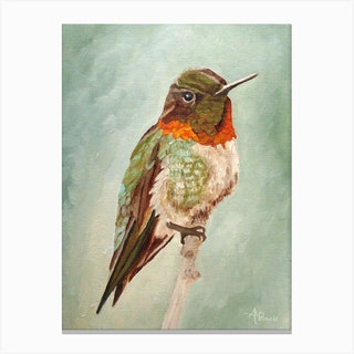 Male Ruby Throated Hummingbird Canvas Print