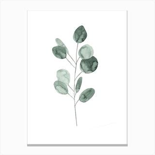 Botanical Illustration Eukalyptus2 Canvas Print