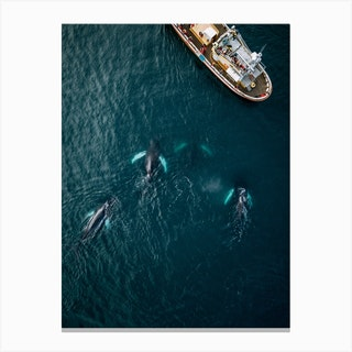 Whales From Above Canvas Print