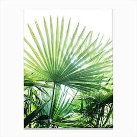 Jungle II Canvas Print
