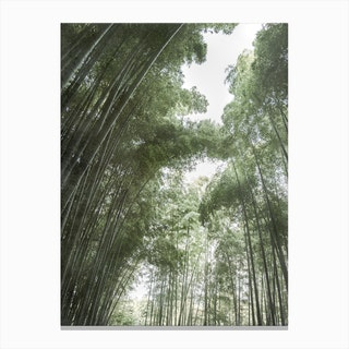 Bamboo Forest I Canvas Print