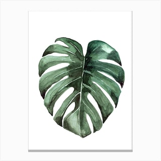 Botanical Illustration   Monstera Deliciosa Canvas Print