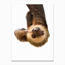 Sloth X Canvas Print