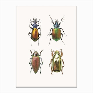 Insects IX Canvas Print