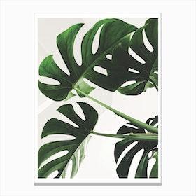 Full Green Plant Canvas Print