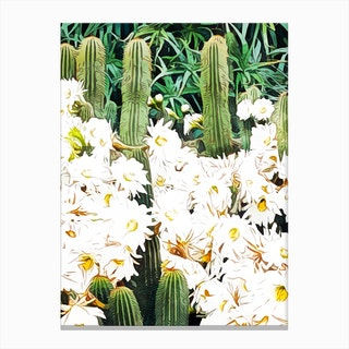 Cactus And Bloom Canvas Print
