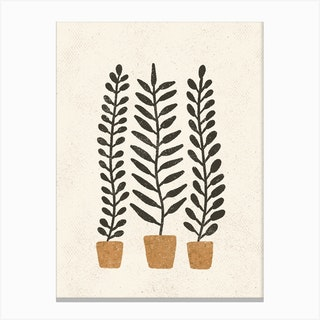 Potten Ferns Canvas Print