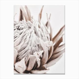 Autumn Protea 1 Canvas Print