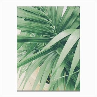Foliage Canvas Print