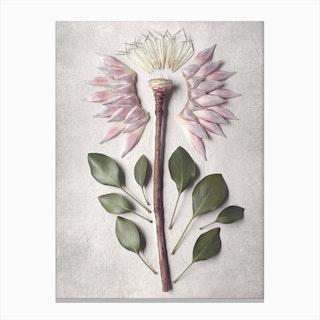 Pale Proteas 4 Canvas Print