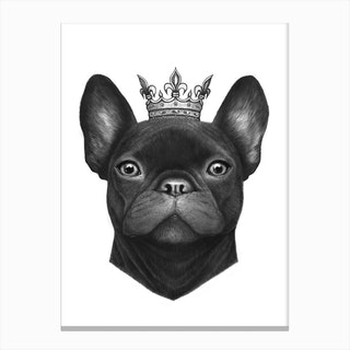 Queen French Bulldog Canvas Print