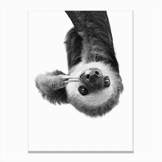 Sloth BW Canvas Print