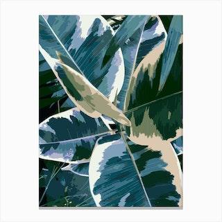Ficus Elastica 1 Canvas Print