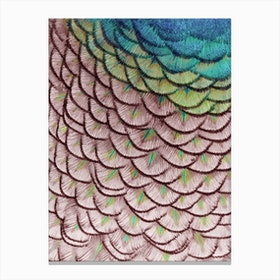Pink Peacock Canvas Print
