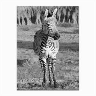 Mountain Zebra Portrait Canvas Print