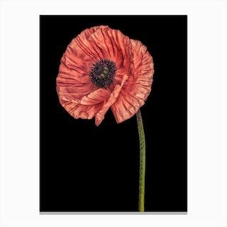 Poppy Pink 02 Canvas Print